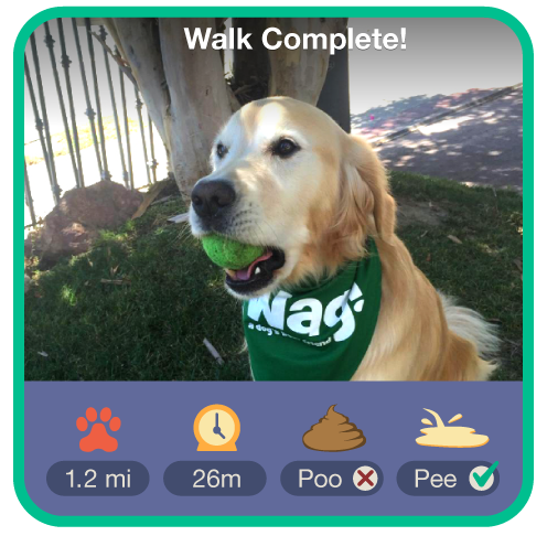 Wag! The Uber of Dog-Walking – Technology and Operations